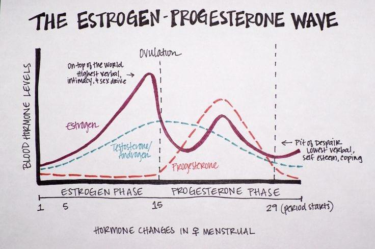 Female Hormones